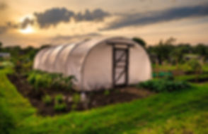 Allotments at sunset - Polythene tunnel