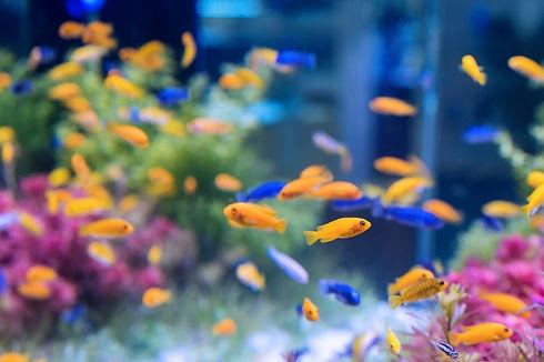 aquario.jpg