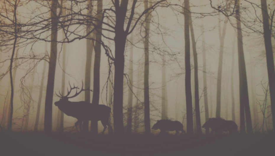 forest-1818690_1920_edited_edited_edited
