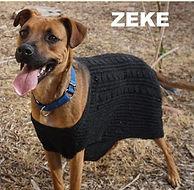 Dew Paws - Zeke (2).jpg