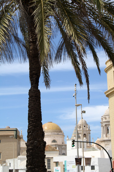 Palmera en Cádiz