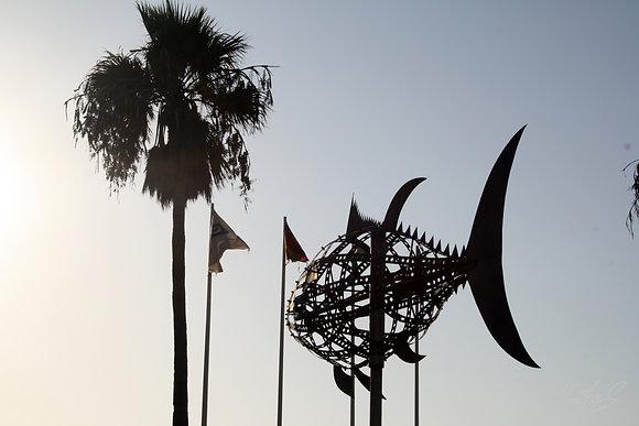 Cádiz - Conil de la Frontera