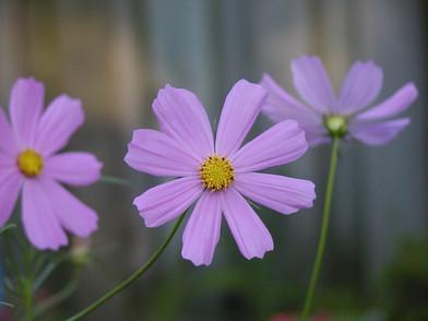 A Tiny Purple Flower