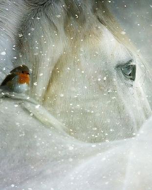 winter-wonderland-3821445_1920.jpg