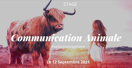 comAnimale-stage12sept.png
