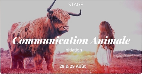 comAnimale-stage28-29aout.png