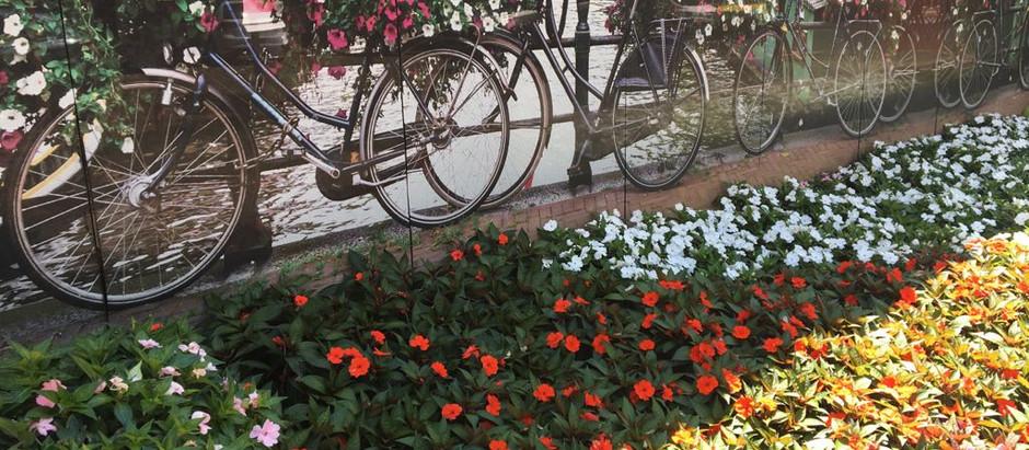 Chegou a Primavera, a Estação das Flores!