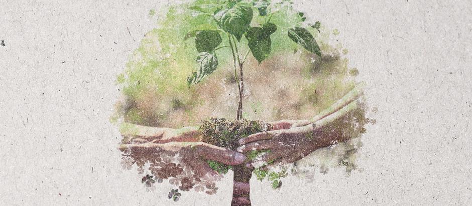 Dia 21 de setembro, comemoramos o Dia da Árvore.