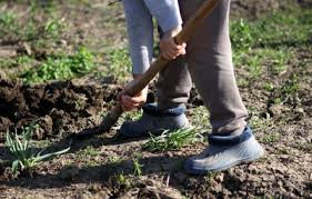 Agronegócio: Como evitar contaminação na produção