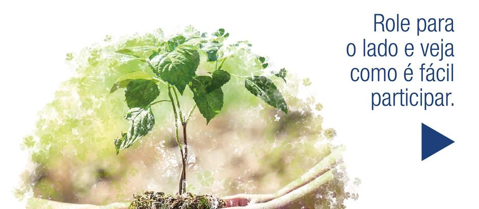 Adote um Ipê: Participe e tenha uma árvore pra chamar de sua
