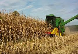 Propriedades rurais  que adotam processos de gestão colhem resultados positivos na primeira safra