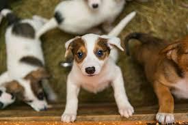 Continua nesse sábado a Campanha de Adoção de Animais
