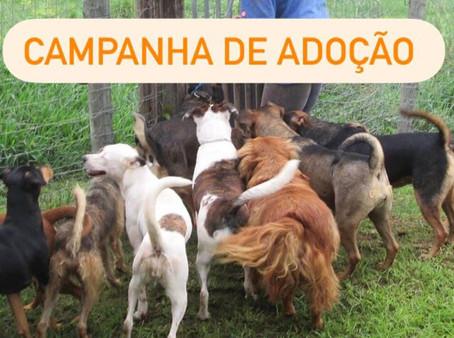 Campanha de adoção de animais acontece neste sábado