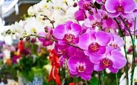 Vendas de flores e plantas para o Dia das Mães deve ter aumento esse ano