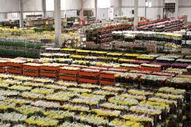 Vendas de flores e plantas caem 70%