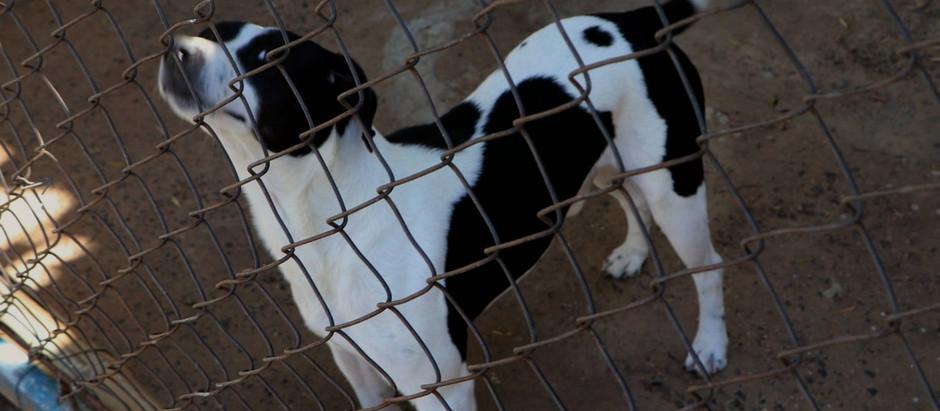 Campanha de adoção responsável  de animais