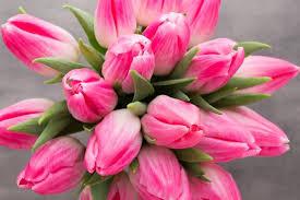 Câmara Holando-Brasileira distribui mais de 13 mil tulipas em dois hospitais da capital paulista