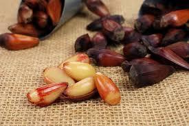 Na gastronomia o pinhão é considerado uma iguaria de inverno