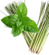 Lemongrass Mint Infused White Balsamic