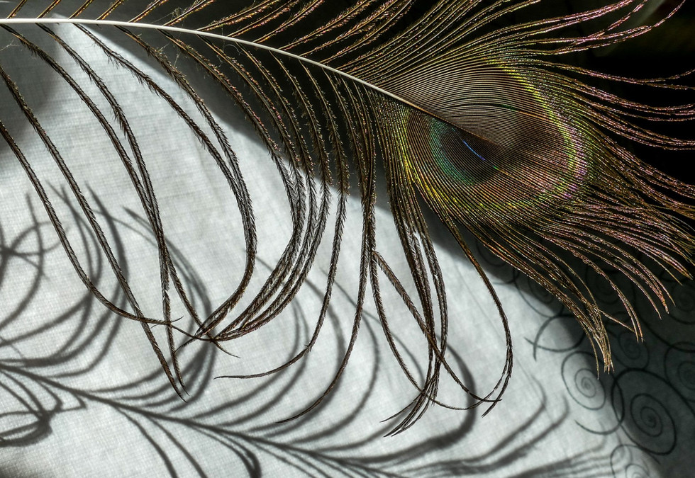shadow feather