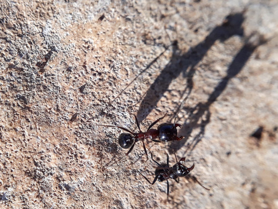 ants with shadow