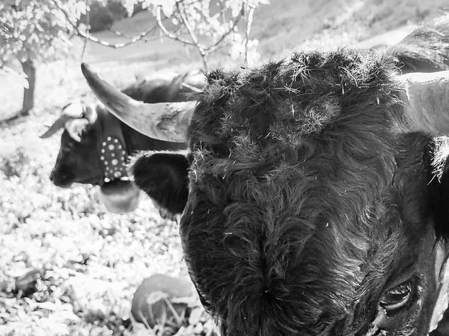 Horns 2