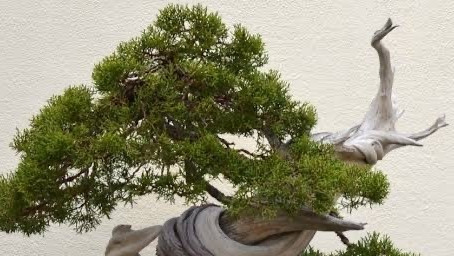 Kinda Big Into Bonsai