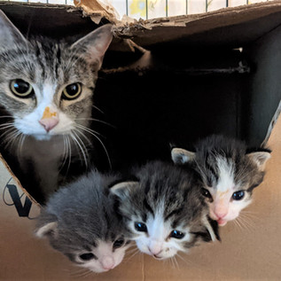 Shannon (and her three kittens)