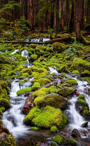 Mossy Green Cascades