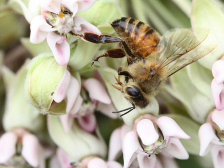 Taste a thousand flowers in every drop. Our bees have lots of Wild Flora to choose from.