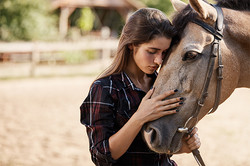 horses_nuzzle_chest