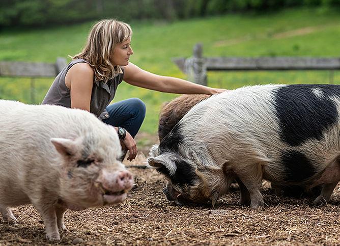 nicole_pigs_website.jpg