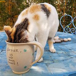 cat_in_cup.jpg