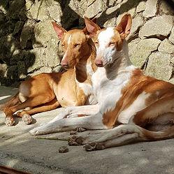 dogs_spain.jpg