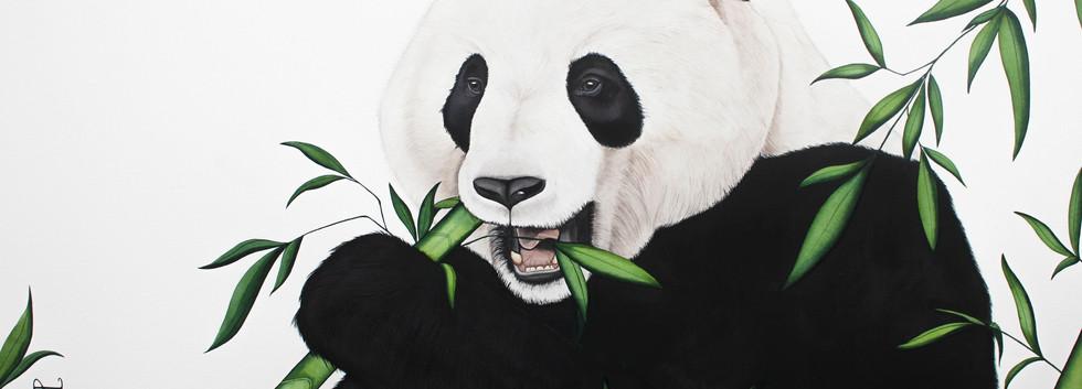 Chang - China's Giant Panda Bear
