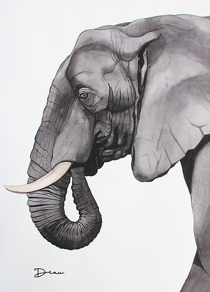Mouse - African Bush Elephant