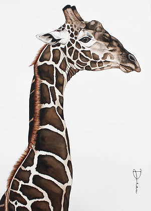 Sim - South African Giraffe