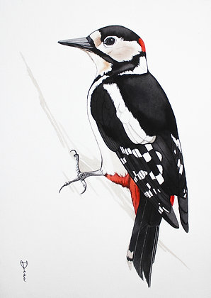 Great Spotted Woodpecker .1