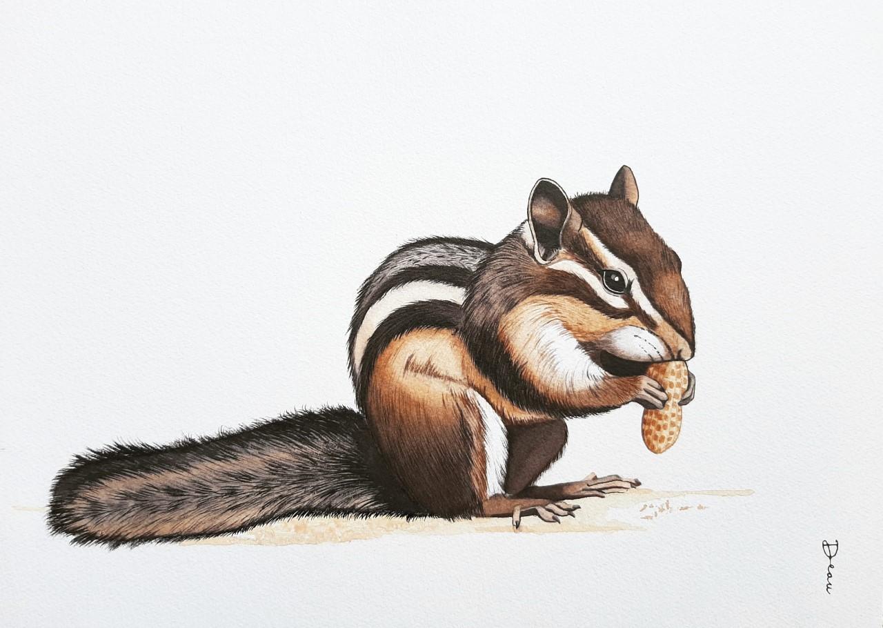 Peanut - Eastern Chipmunk | €250