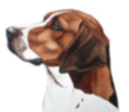Harrier Dog _edited.jpg