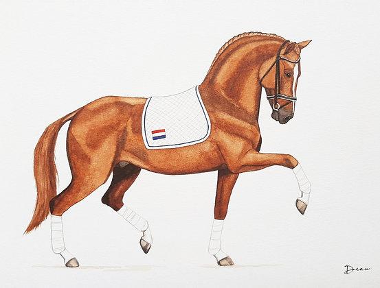 Chestnut KWPN Dressage Horse