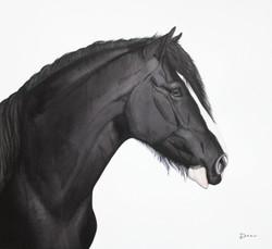 Black Shire | €550