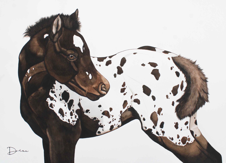 James - Appaloosa foal