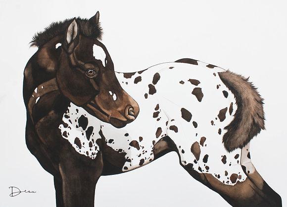 James - Appaloosa Horse Foal