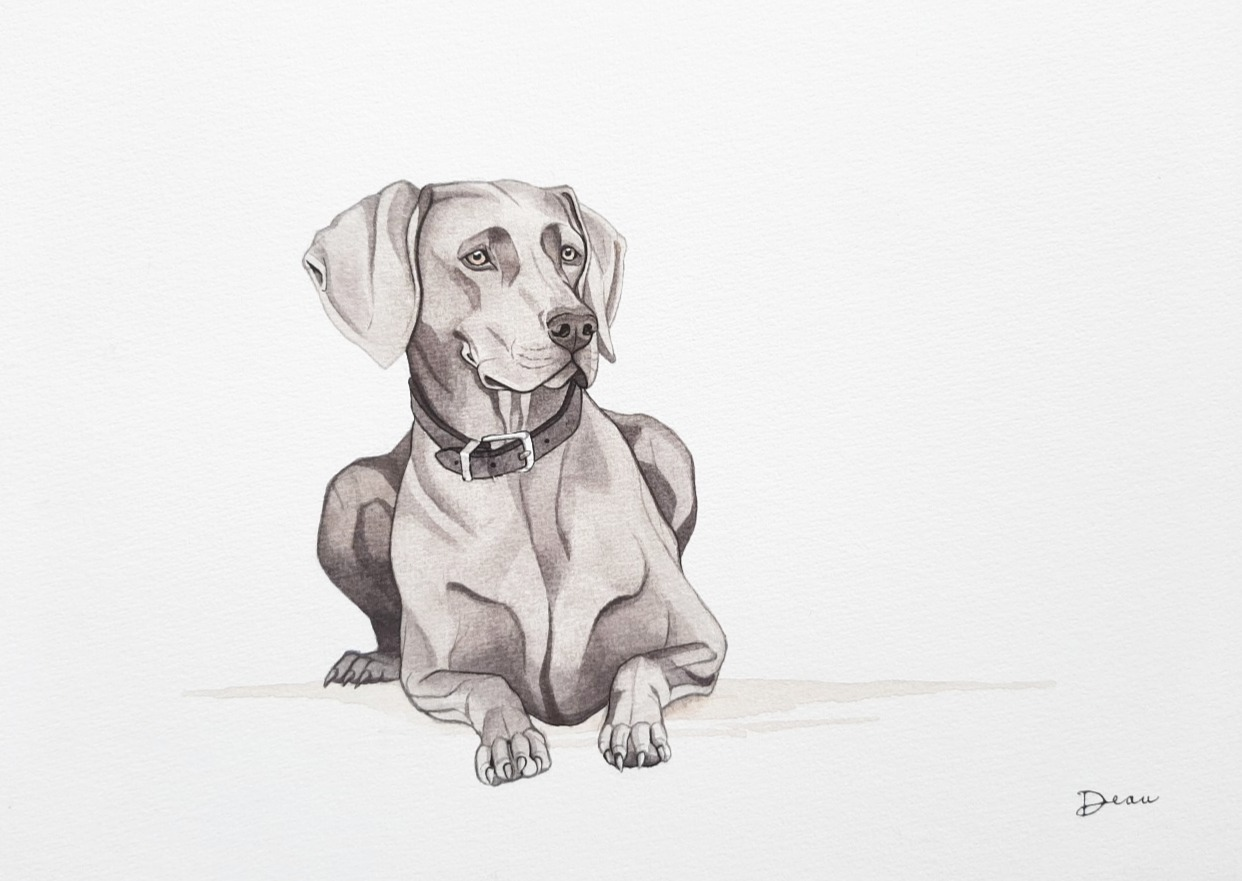 Abby - Weimaraner | Commissioned