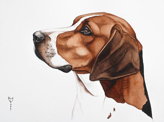 George - Harrier Dog
