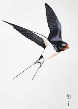 Barn Swallow | € 200