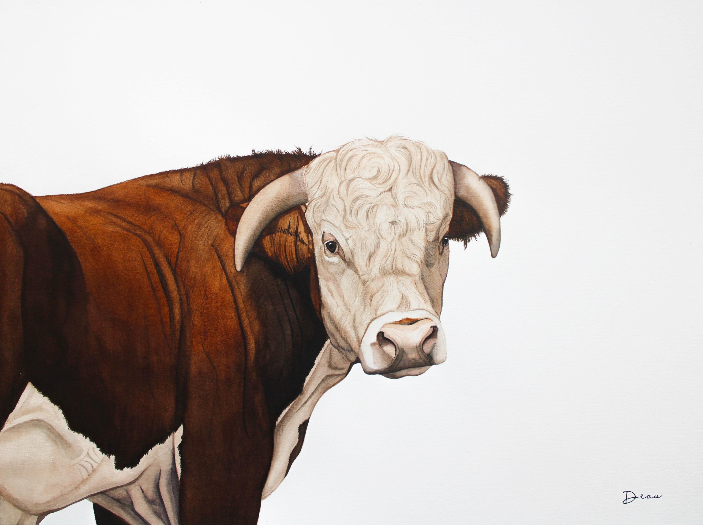 Hereford Bull  |  € 650