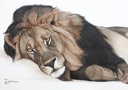 Mufasa - African Lion | €2500