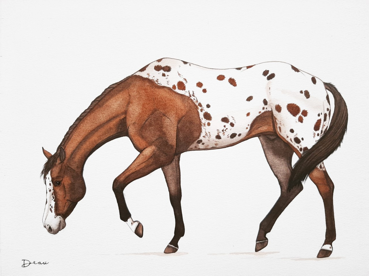 Sniffing Appaloosa | SOLD